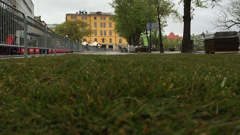 gräset på Engelbrektsgatan rullas ut