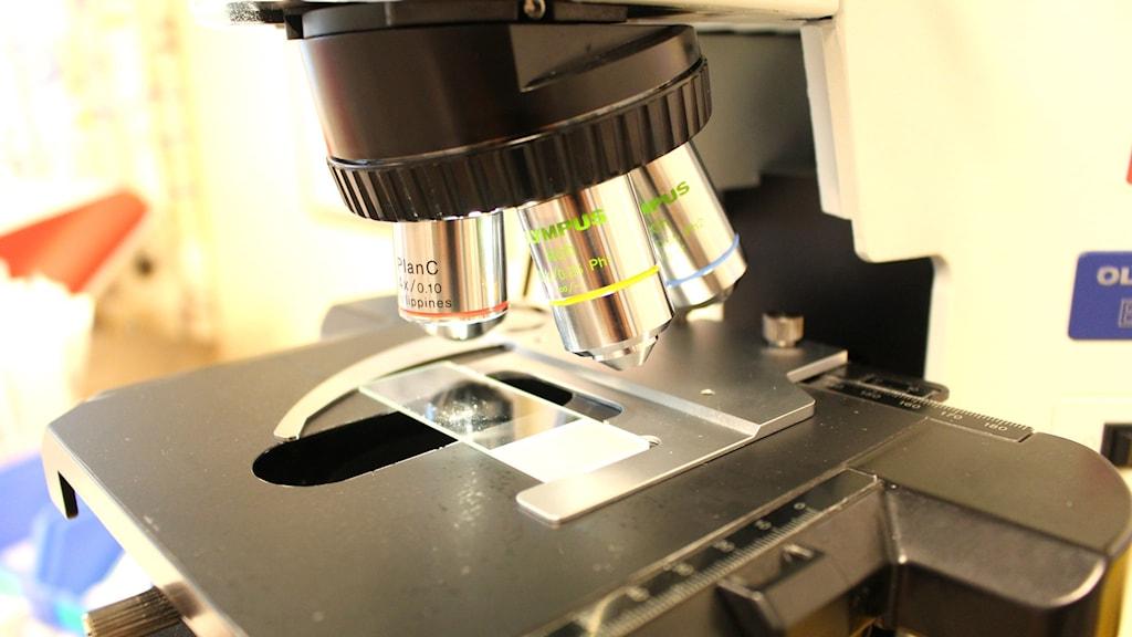 Mikroskop, microskop, test, forskning, studie, lupp, undersökning, labb