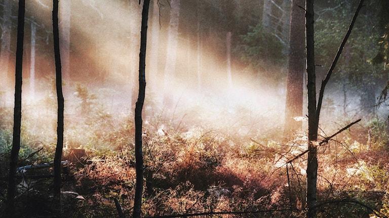 Skog i närheten av Karlskoga