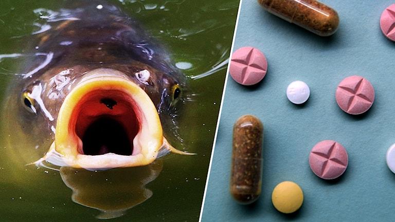 Fisk och läkemedel