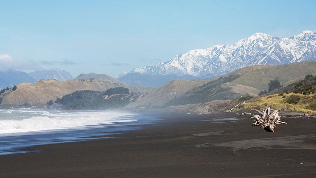 Naturbild från Nya Zeeland.