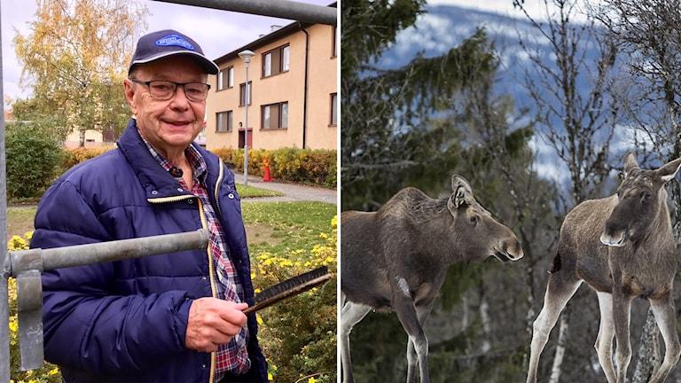 Willy Karlsson jagade för 50 år sedan: Aldrig mer.