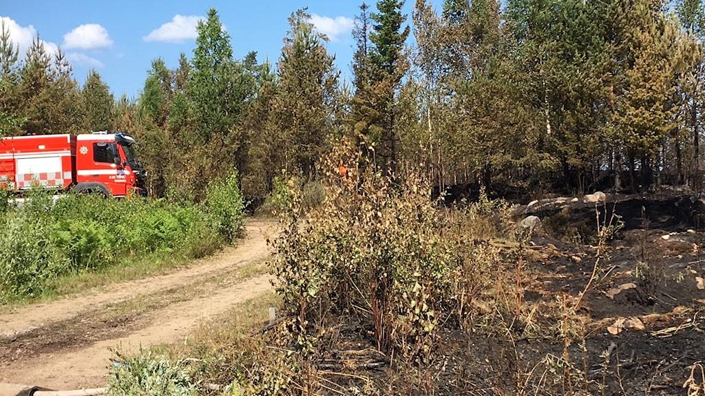 En brandbild vid skogsbrand.