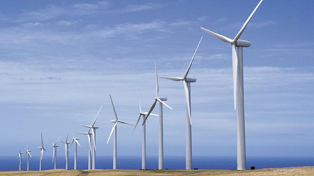 Vindkraftverk kan snart bli en ovanlig syn i Östergötland. Foto: Michael Darden/Scanpix