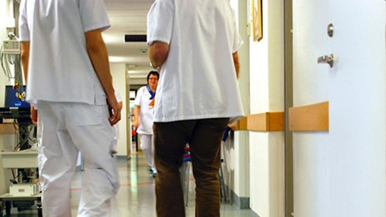 Köerna på urologen ökar efter att avgiften på sterilisering sänktes.