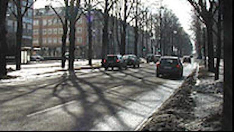 Östra promenaden i Norrköping Foto: Pelle Zettersten/Sveriges Radio
