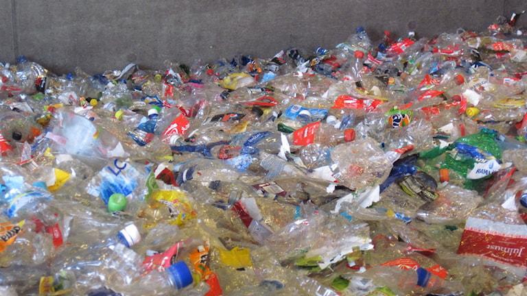 Ett hav av PET-flaskor. Foto: Marie-Louise Kristensson/Sveriges Radio