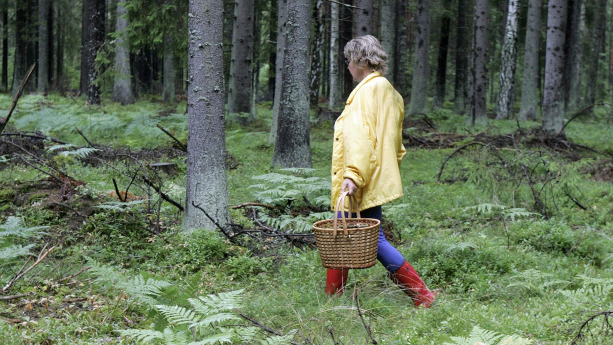 Dvargbandmask Oroar I Finspang Eftermiddag I P4 Ostergotland Sveriges Radio
