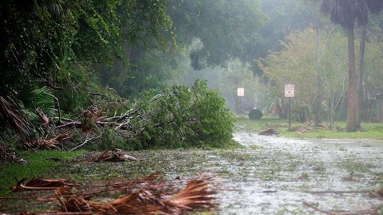 Spåren av orkanen Matthew i Florida.