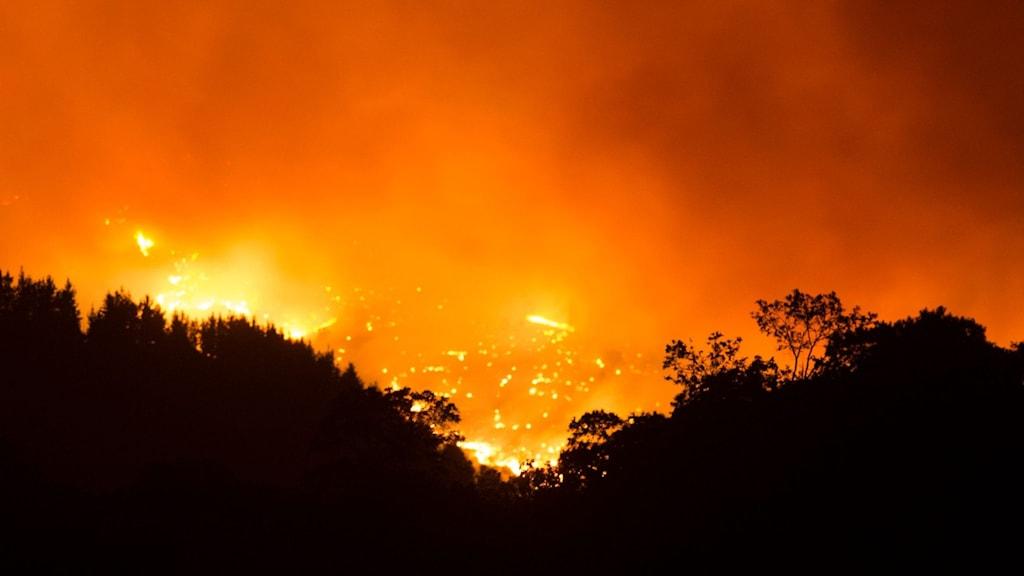 brand rasar i skog mot mörk himmel.
