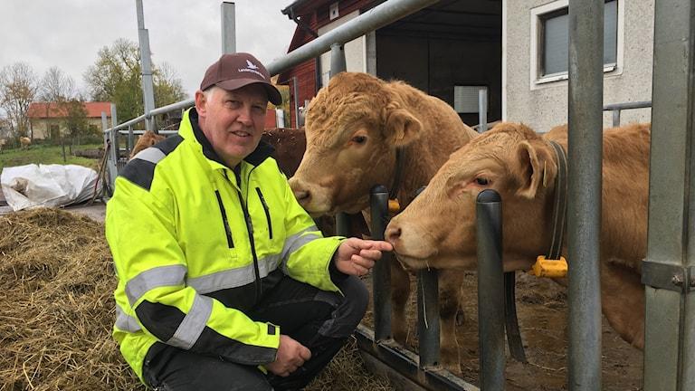 Årets nötköttsföretag i Östergötland tilldelas Krister Sildeborn i Boxholm.
