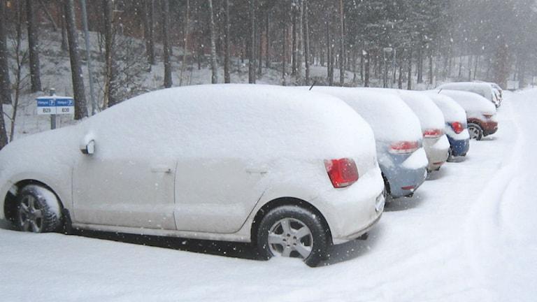 Insnöade bilar på parkering foto:Maria Turdén/Sveriges Radio