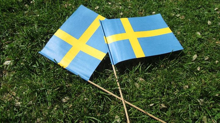 Svenska flaggan i gräset foto:Maria Turdén/Sveriges Radio