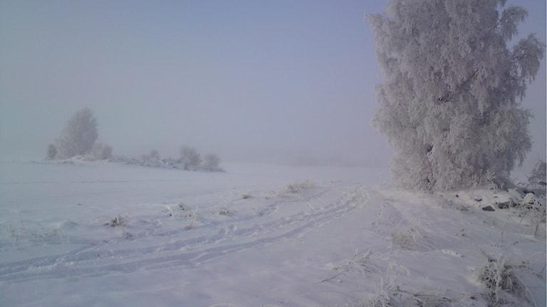 Vinterlandskap med skidspår.