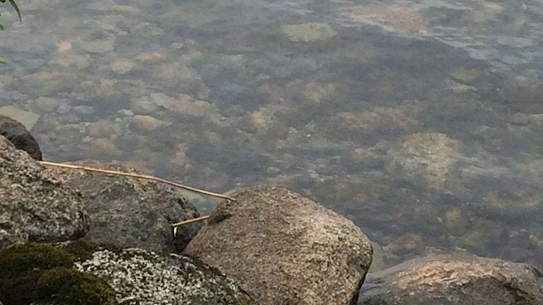 Strandkant med stenar. Foto: Christina Turesson/Sveriges Radio