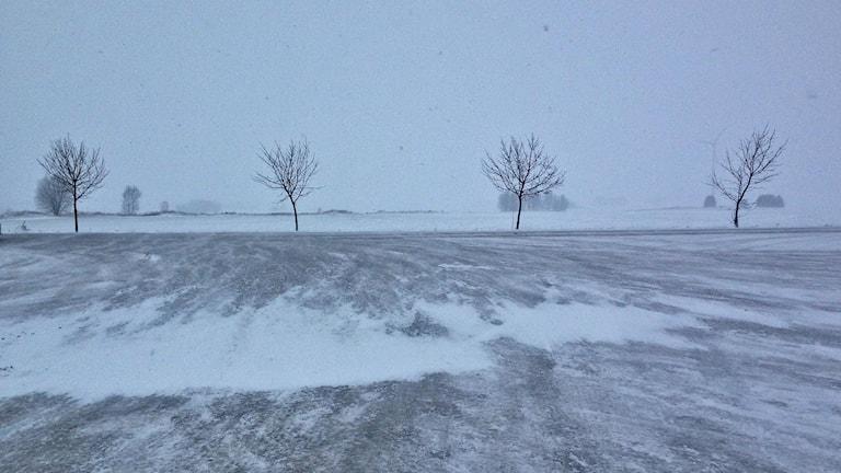 Landskap med snö. Foto: Jimmy Calmerberg/Sveriges Radio