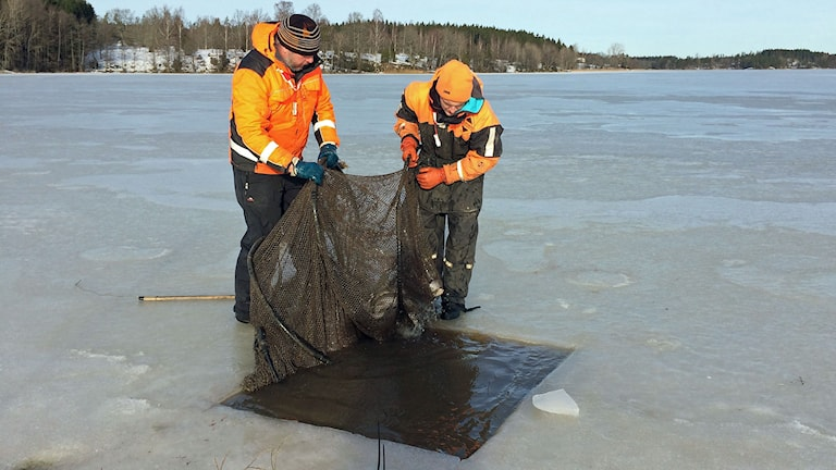 Fiskarna Anders Nilsson och Martin Mattsson. Foto: Jessica Gredin/Sveriges Radio