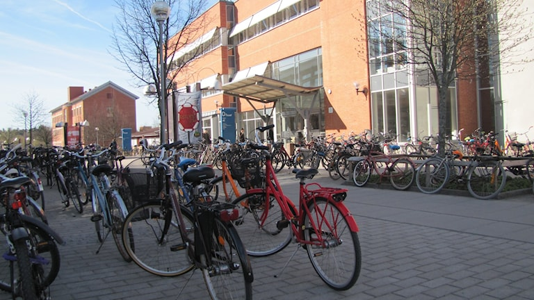 Parkerade cyklar. Foto: Rosmari Karlsson/Sveriges Radio