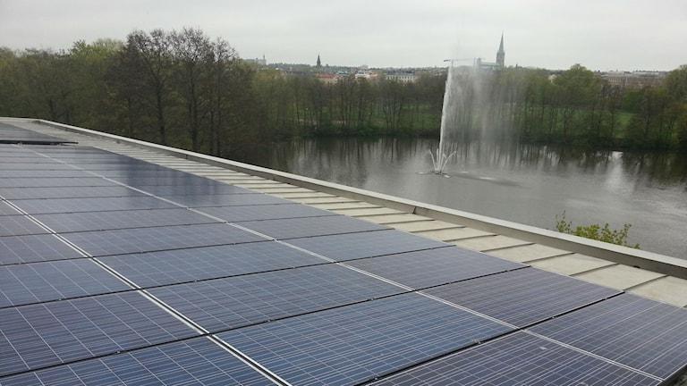 Solpaneler på Tekniska verkens tak i Linköping. Foto: Molly Berggren/Sveriges Radio