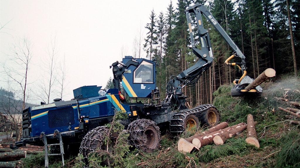 Skogsmaskin. Foto: Fredrik Persson/TT