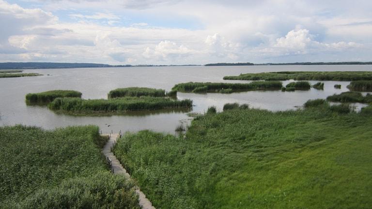 Sjön Tåkern