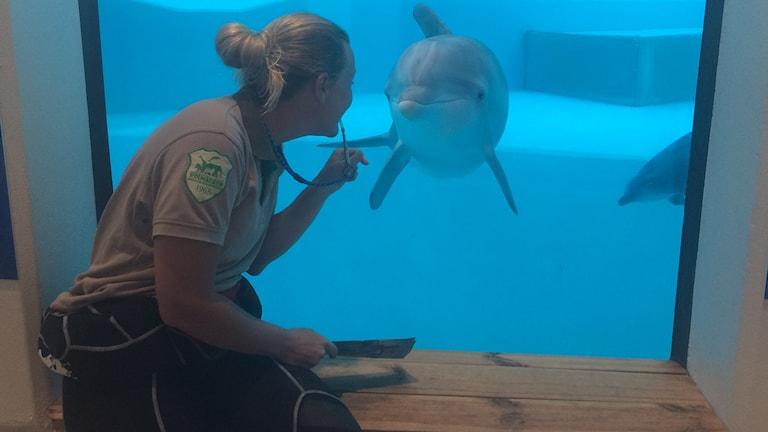 Delfinskötare Kristina Karlsson hälsar på delfinen Pärla genom glaset in till bassängen.