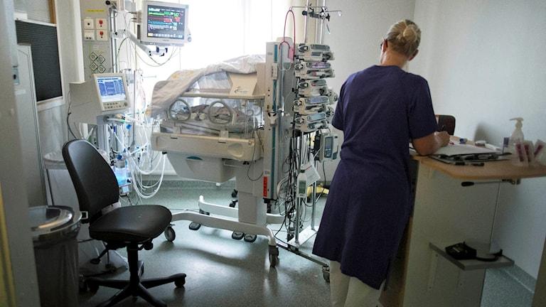 Neonatalvård. Foto: Björn Larsson Rosvall / TT