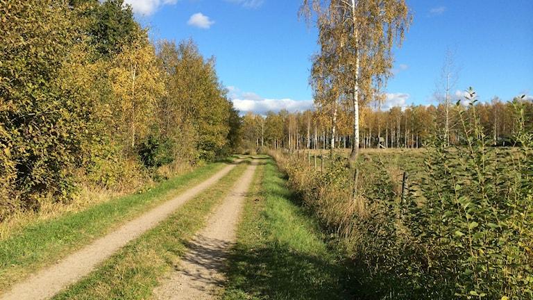 Landsväg med gräs i mitten går genom höstligt öppet landskap. Foto: Raina Medelius/Sveriges Radio
