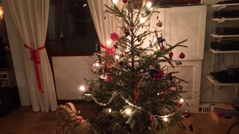Årets julgran snart ett minne blott. Foto: Rosmari Karlsson Sveriges Radio