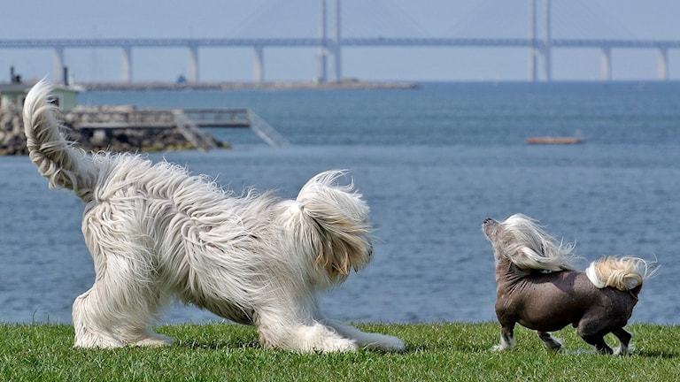 Hundar. Foto: Johan Nilsson/TT