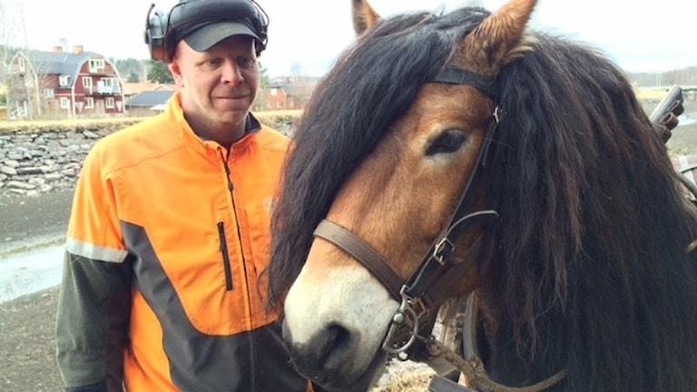 Mathias Stern, Vånga Hästkraft, och nordsvensken Krans.