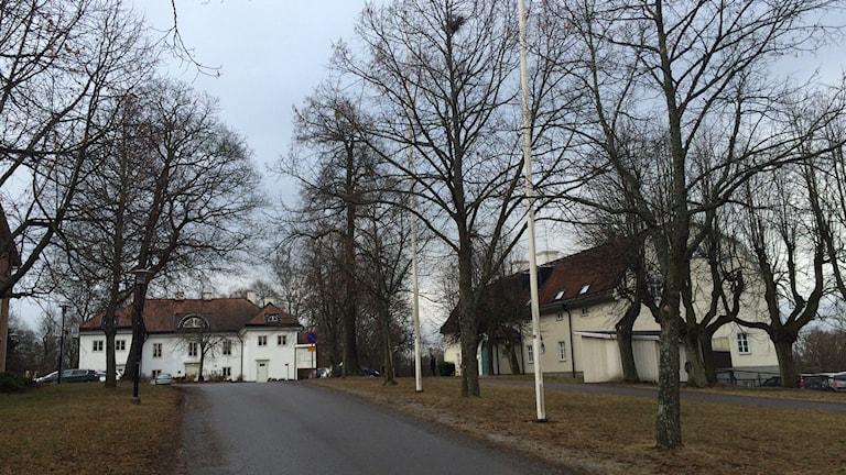 Två vita byggnader bland avlövade träd. Foto: Malin Marcko/ Sveriges Radio