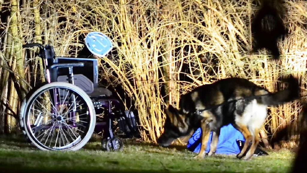 Rullstol och polishund. Foto: Niklas Luks/Nyhetswebben.se
