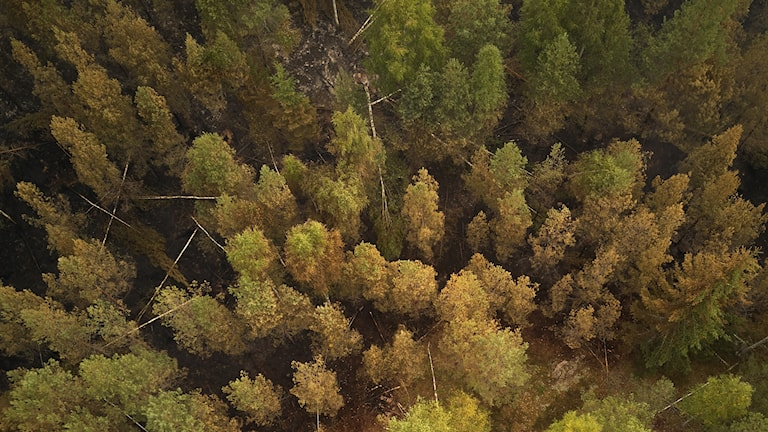 Genrebild. Larm om skogsbrand i Åtvidaberg.