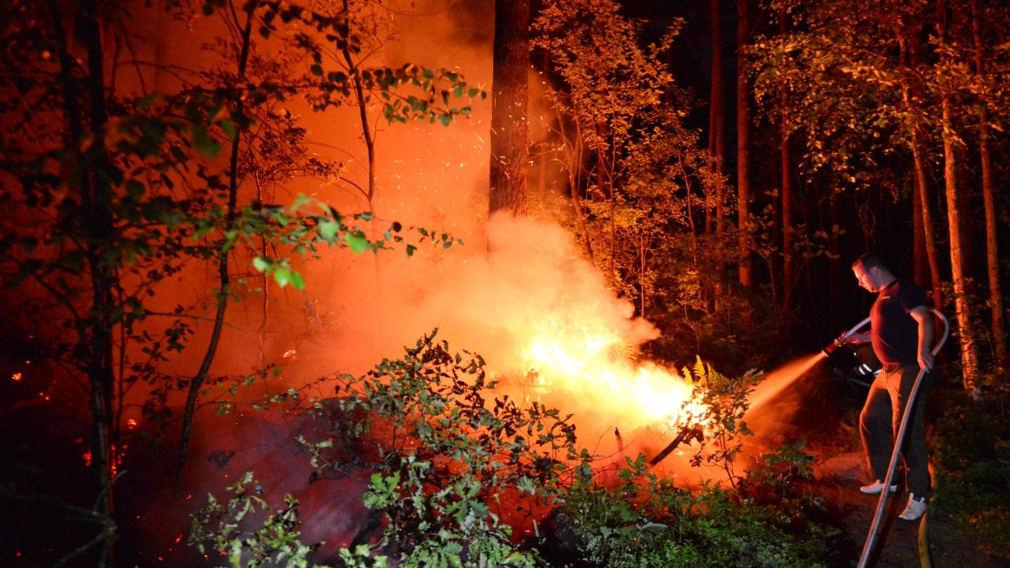 Skogsbrand i vrinneviskogen i norrkoping