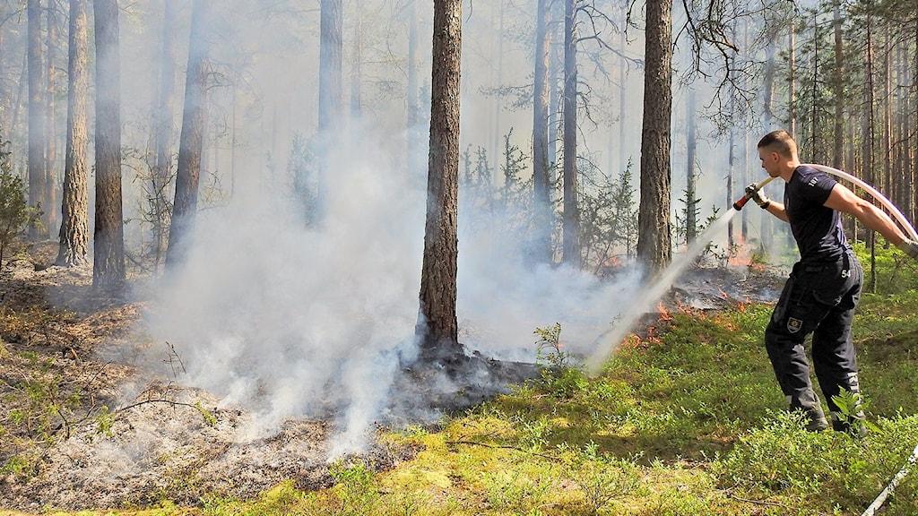Räddningstjänsten bekämpar en brand i Vrinneviskogen i Norrköping.