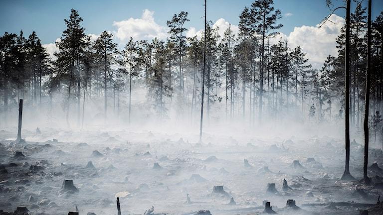 Genrebild skogsbrand
