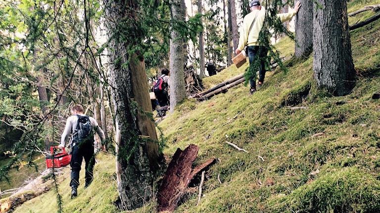 Svamplockning i Skogssjöområdets naturreservat i Mjölby.