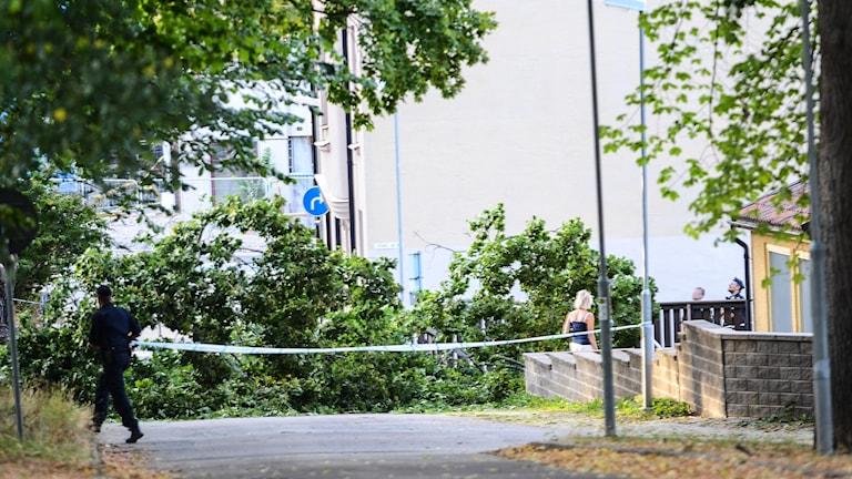 nedfallet träd i centrala Linköping