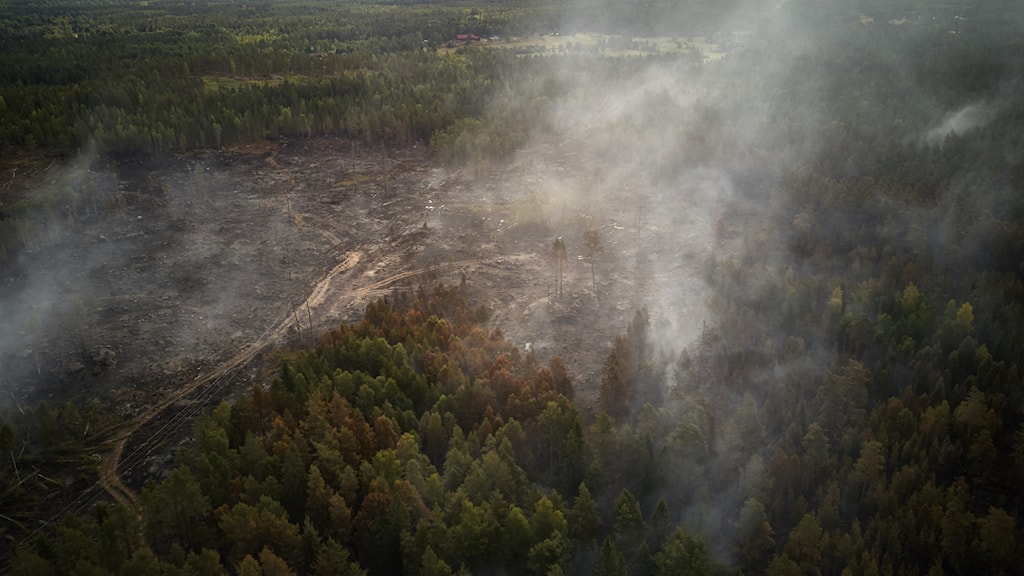 Genrebild skogsbrand.