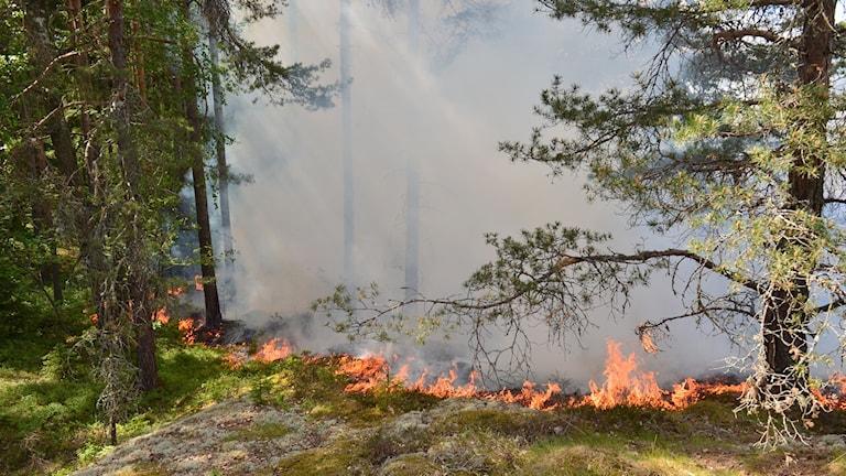 Skogsbrand Vrinneviskogen