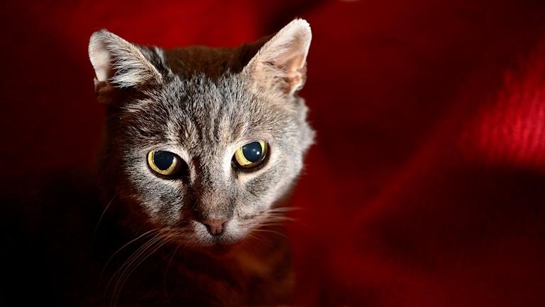 Katt/TT