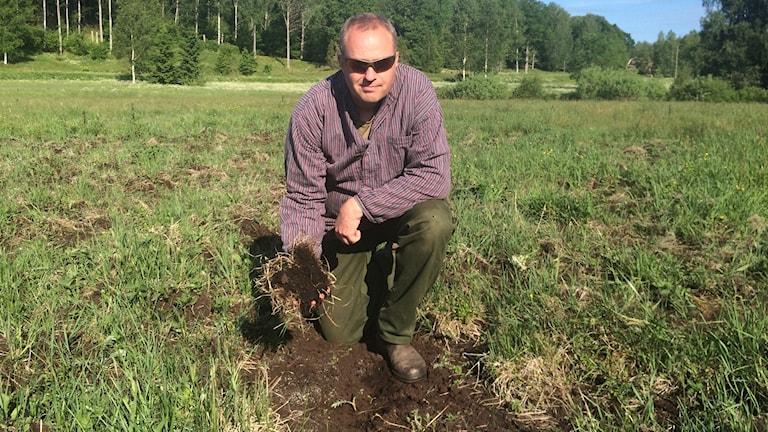 Björn Pihl har fått stora delar av sin åker förstörd av viltsvin