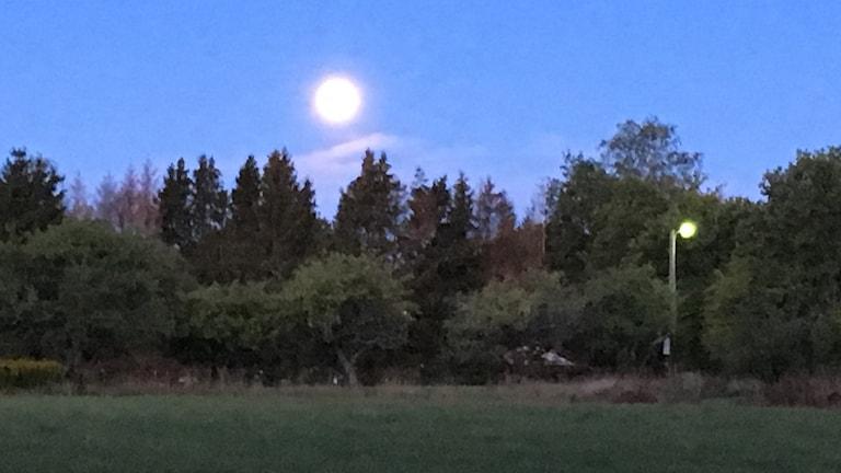 Fullmåne i gryning.