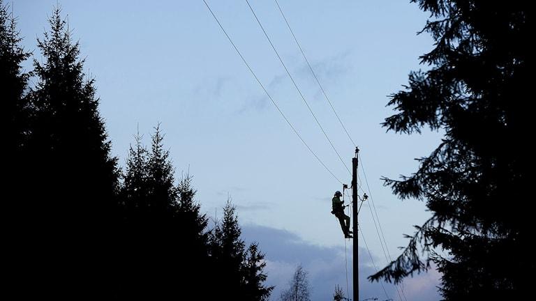 Röjning och reparation av el-ledningar. Foto: Ola Torkelsson/TT