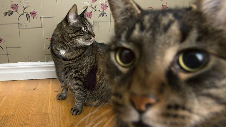 Katter/TT