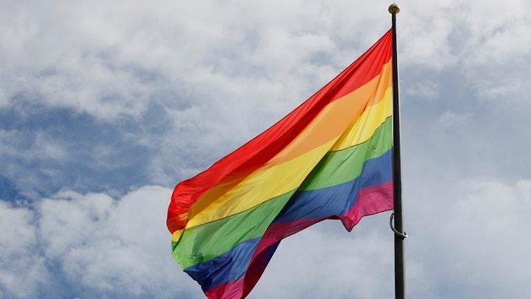Regnbågsflagga/TT