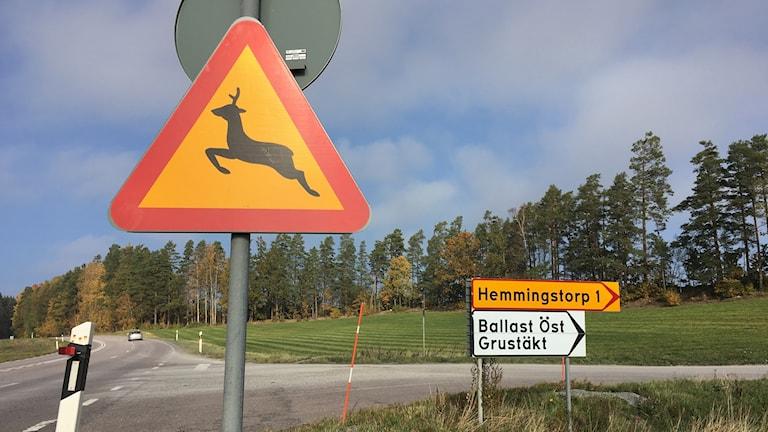 Plåtskyltar är inte nog varning på riksväg 35 enligt Trafikverket.