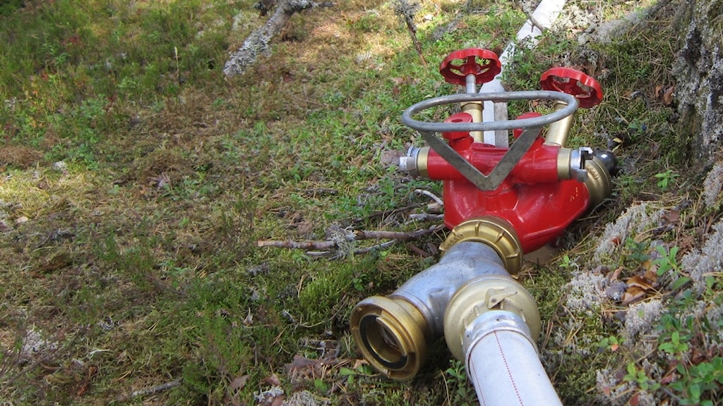 Brandslag med kopplingsmöjlighet i skog. Foto: Raina Medelius/Sveriges Radio