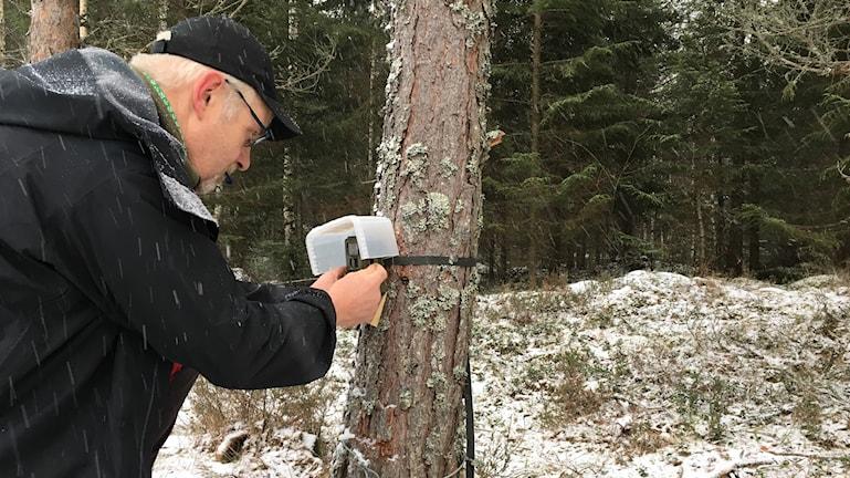 Anders Hedström, rovdjursspårare åt Länsstyrelsen